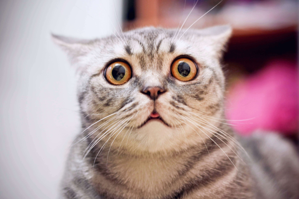 まさにモフモフ天国‼大の猫好きライターが初めて「猫カフェ」に行ってみた。