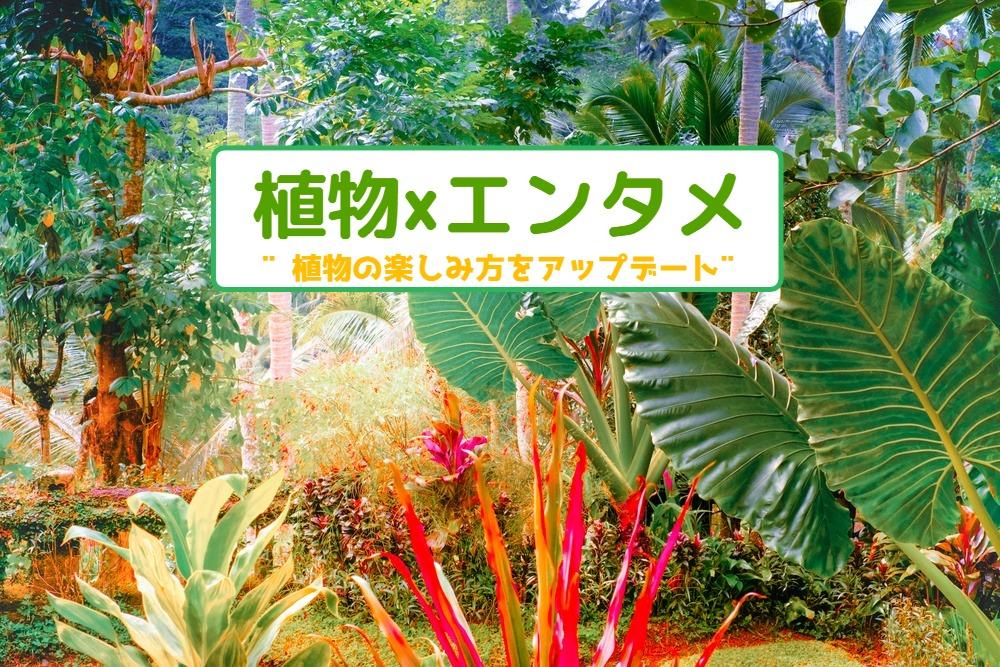 植物×エンタメ🌵植物の楽しみ方をアップデート‼