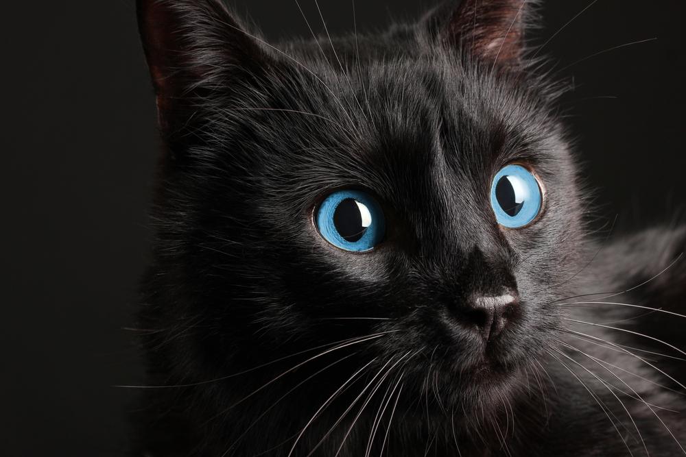 不吉なんかじゃない!かわいい黒猫のオススメ動画&情報まとめ🐾