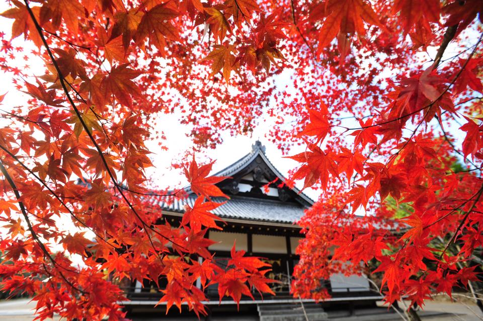 【京都】金戒光明寺・浄住寺にて、非公開の文化財や紅葉の映える庭園が期間限定で公開!