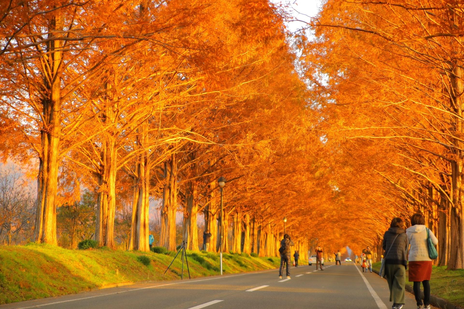 この秋に行きたい! 全国各地の超絶景紅葉スポット