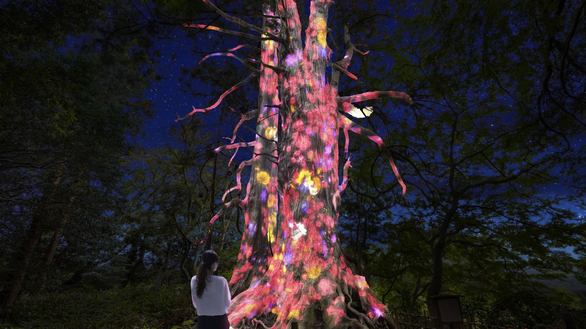 日本三大名園で観る、梅×光のアート『チームラボ偕楽園 光の祭』